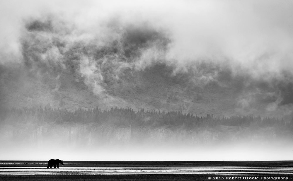 Brown-bear-and-mist-Hallo-Bay-Alaska-Robert-OToole-Photography-2015