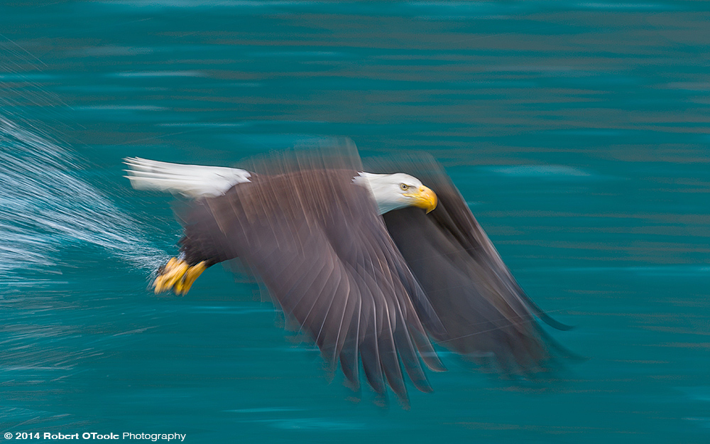 Eagle-speed-blur-jade-colored-water-Robert-OToole-Photography