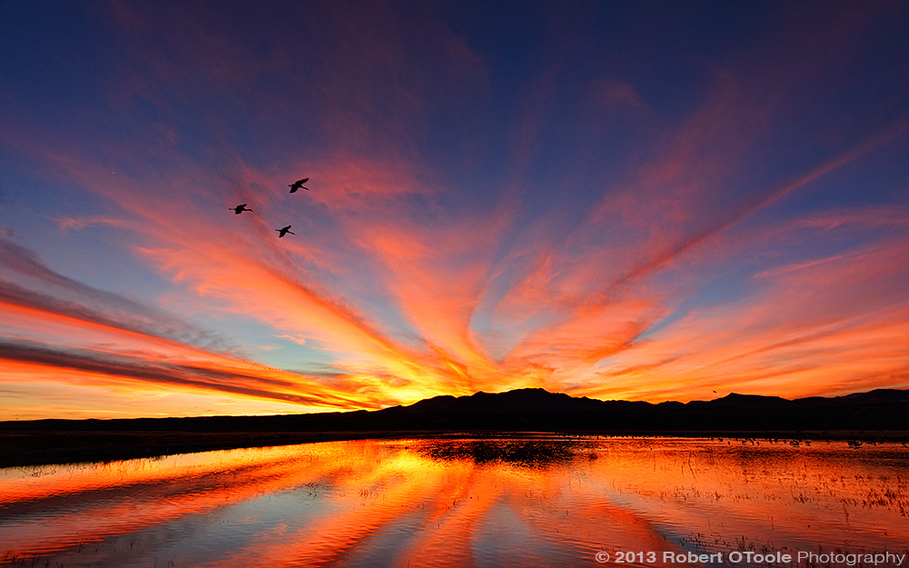Three-crane-sunset-Bosque-New-Mexico-2013-RobertOToole-Photography
