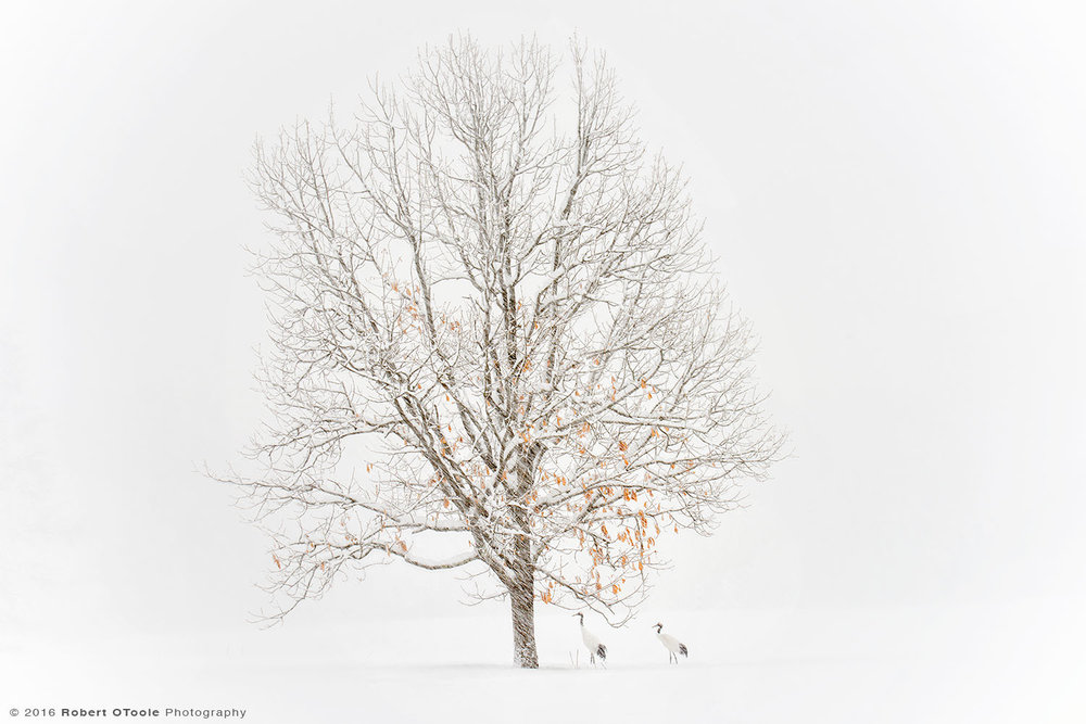 Pair of Red crowned Cranes Seek Shelter under the Tree from  the Blizzard