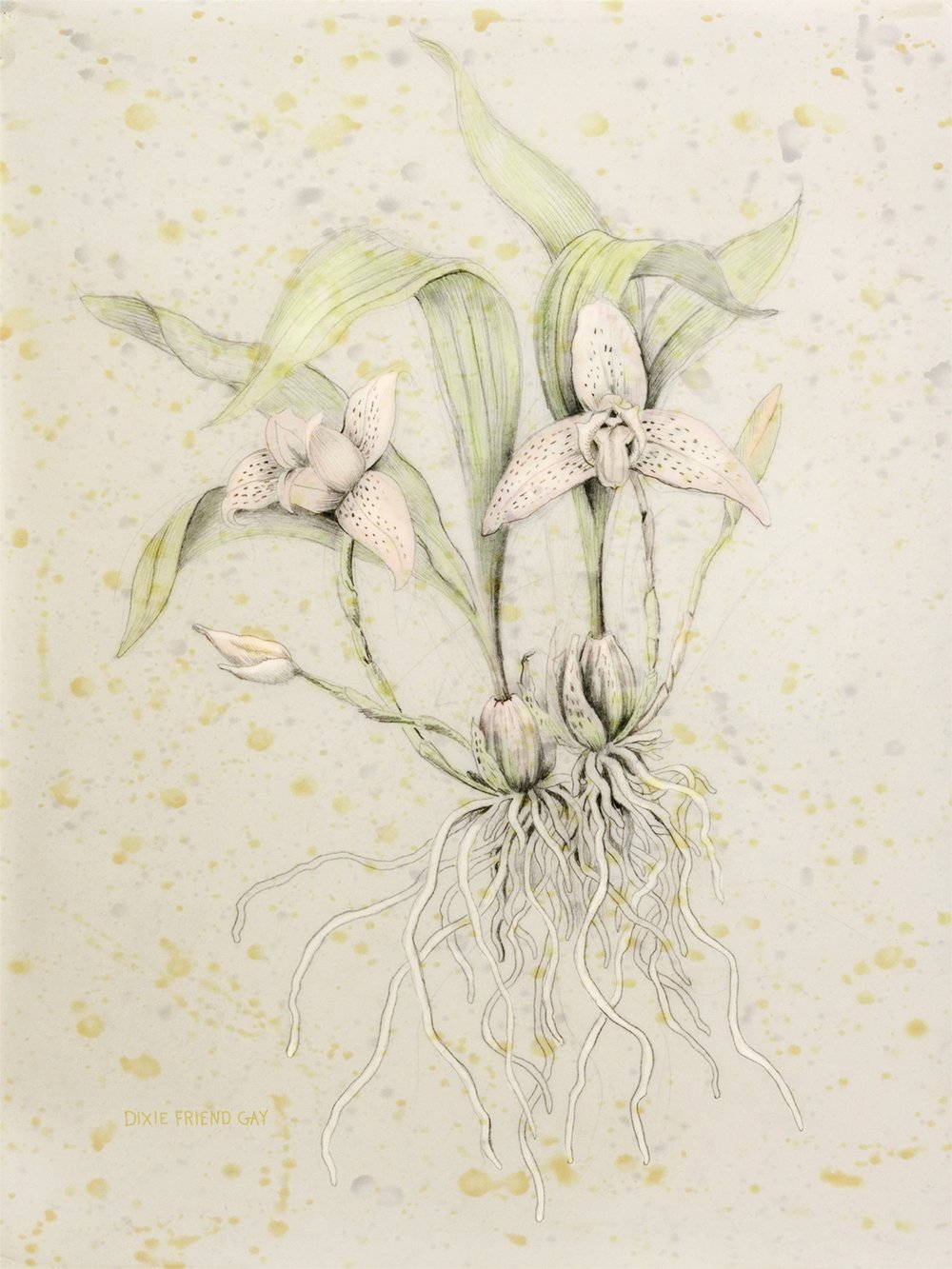 Orchid, 2012