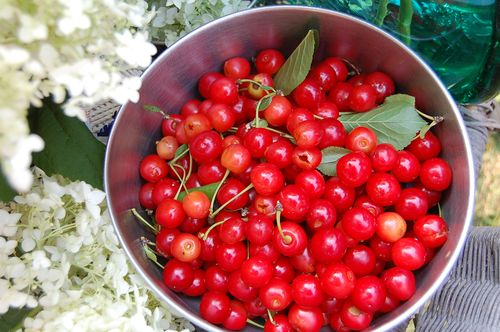 ©2013Lindsay-Obermeyer-Cherries.jpg