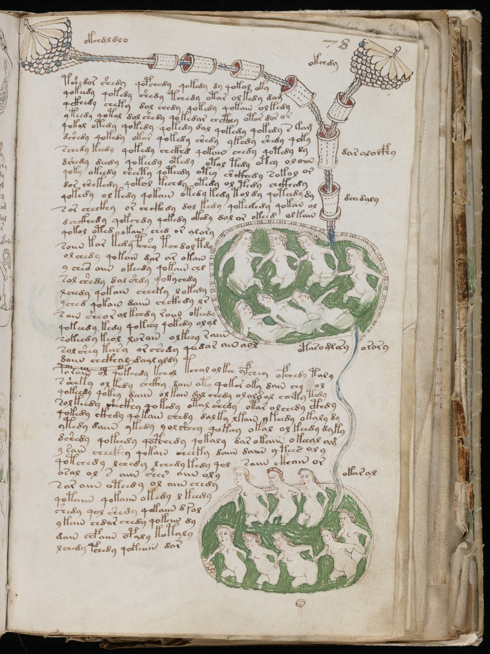 "A page from the ""biological"" section of the Voynich Manuscript, via Wikimedia Commons"