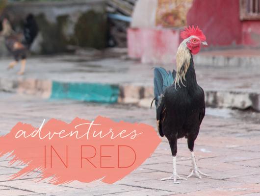 Shewanders-WEB-OURWORK-SUZANNE-ADVENTURE-RED.jpg