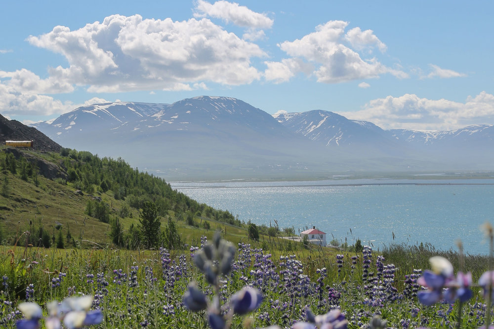 1427.1309.iceland.shewanders.suz-2875.jpg