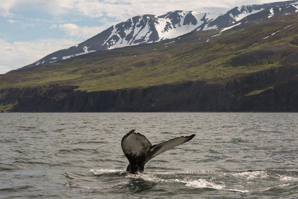 1446.1328.iceland.shewanders.suz-3394.jpg