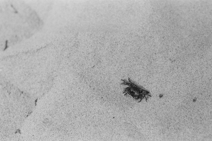 san crab, shewanders photography, richards photo lab, pentax k1000