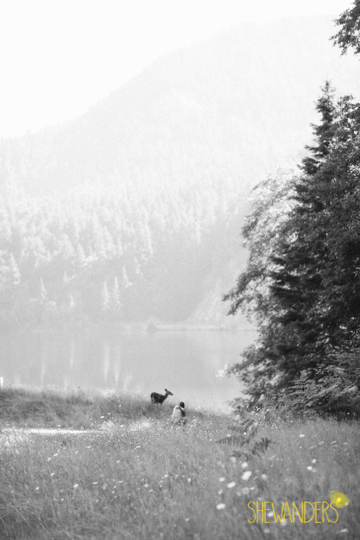 shewandersblackandwhitedeerfallforest