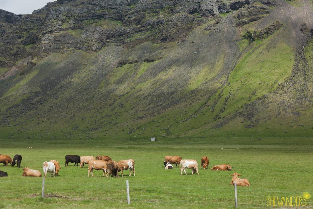 Shewanders.Iceland1Blog1006.jpg1Blog1006.jpg