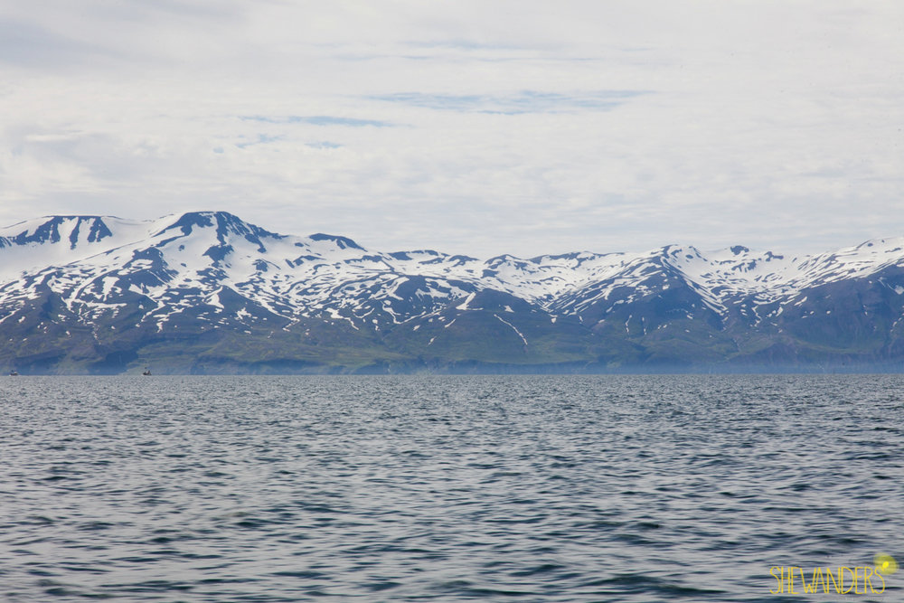 Shewanders.Suzanne.Iceland_1018.jpg.Iceland_1018.jpg
