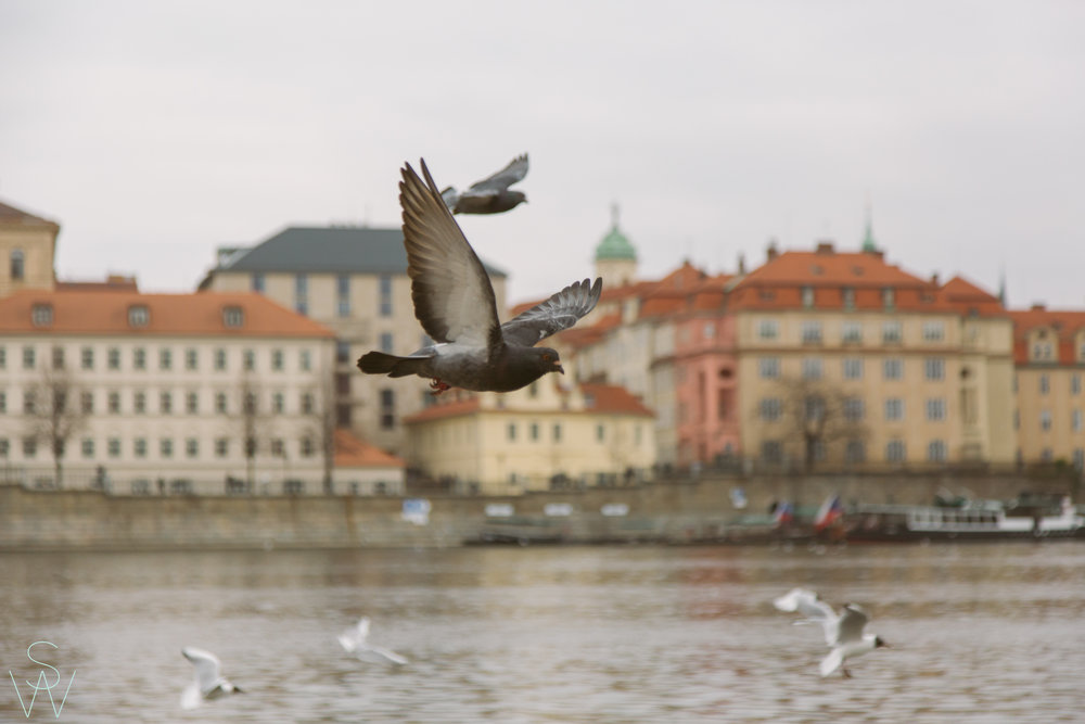 1004shewanders.loves.prague.addingtotheofeldts.jpg