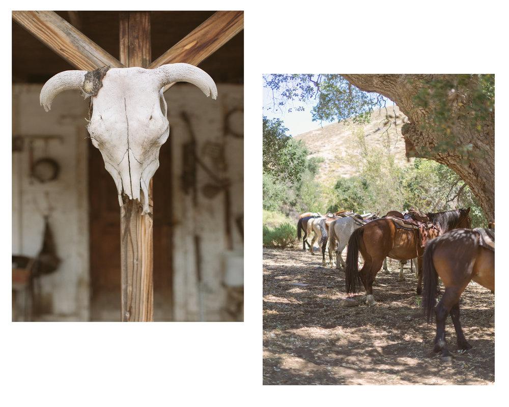 RanchBlog5.jpg