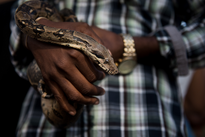 A man holds his pet snake in New Orleans.