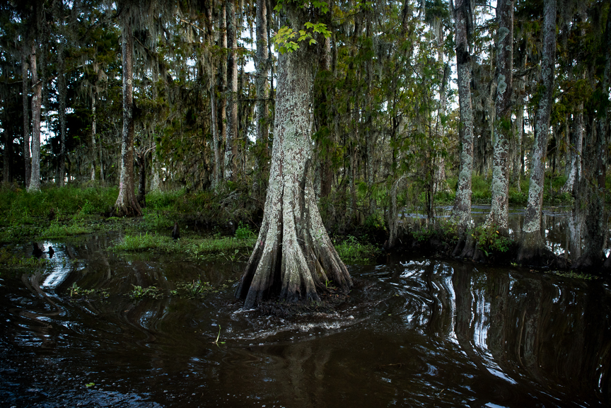 The swamps in Des Allemands, La.