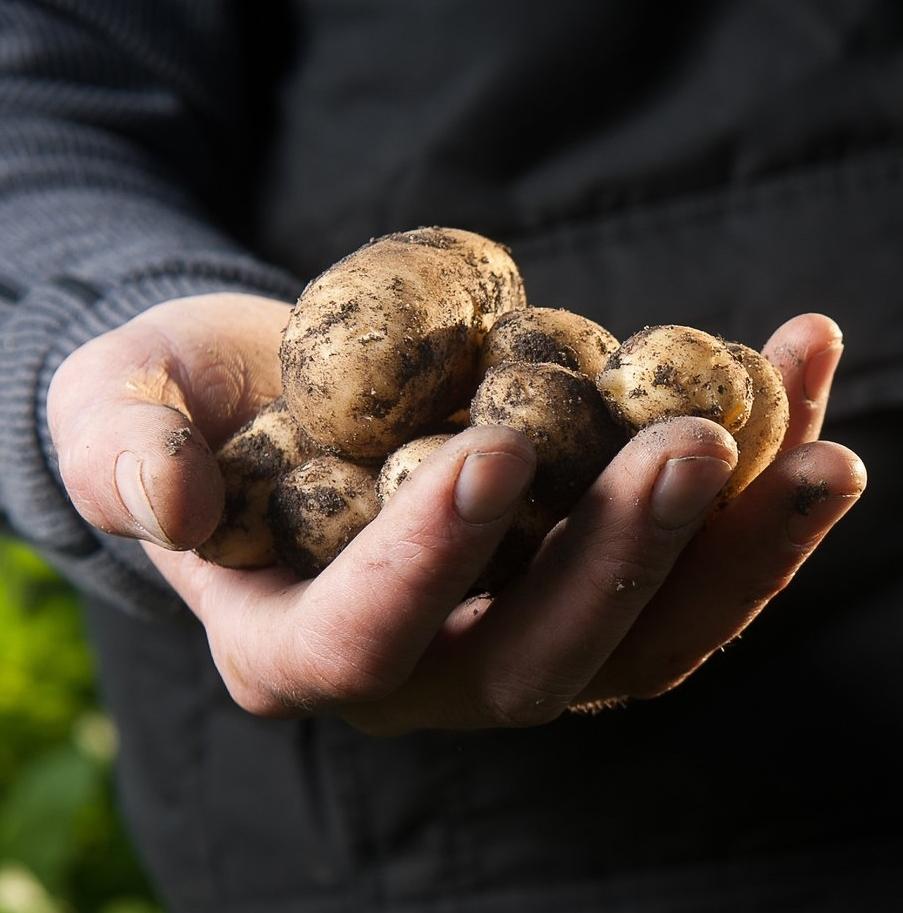 hand with mushrooms