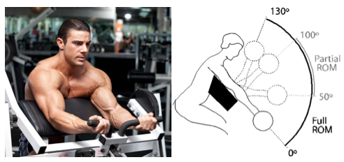 From -    Partial vs. Full Reps… or Both? - Bret Contreras