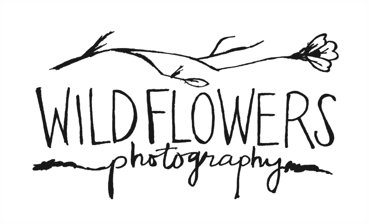 Wildflowers Photography
