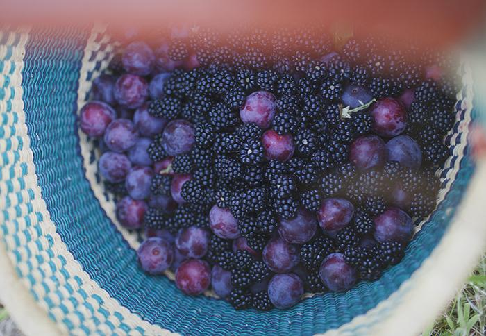 WEB-berriesblog