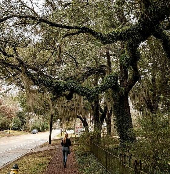 Quiet strolls through New Orleans. 🌿 Captured by@anniehvieira.