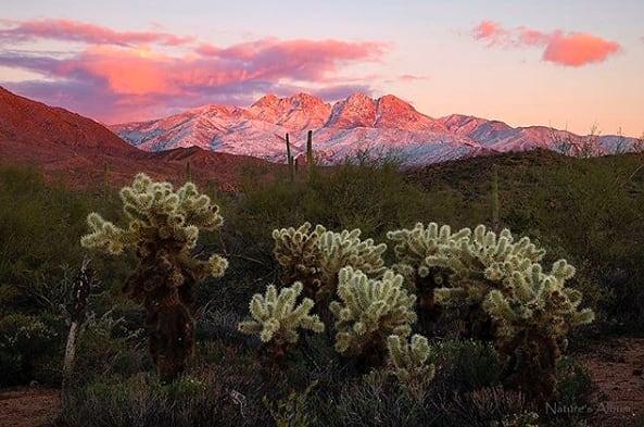 You're pretty, Phoenix. 🌵🌸 (pc:@naturesalbum)