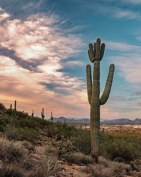 Quiet desert drives. 🌵 Thanks for the gorgeous shot, @sarahjakethejew!
