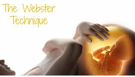 webster certified chiropractor fort collins