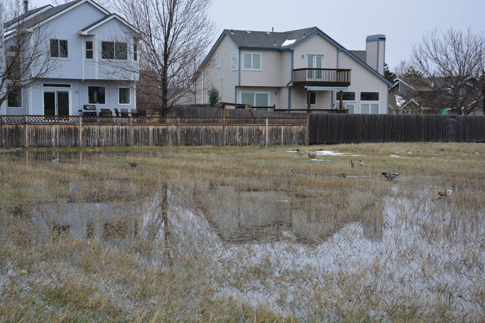 With even the slightest rain or snow, flooding and standing water are a common site on the lands Boulder County and the City of Boulder desire to develop with nearly 300 apartments.