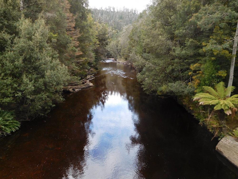 foret river 2.JPG