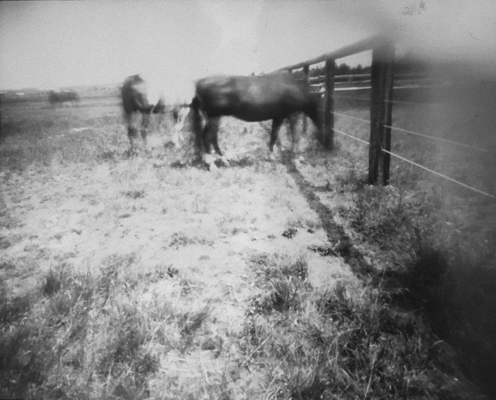 horsepinhole3.jpg