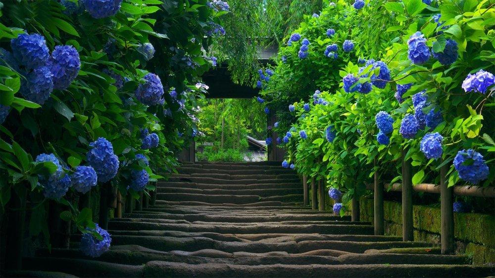 hd-nature-wallpaper-blue-flower-most-hd-wallpapers.jpg