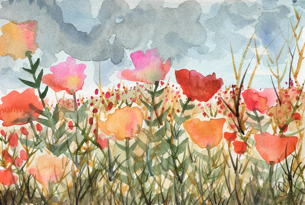 Poppies by Liana Allday