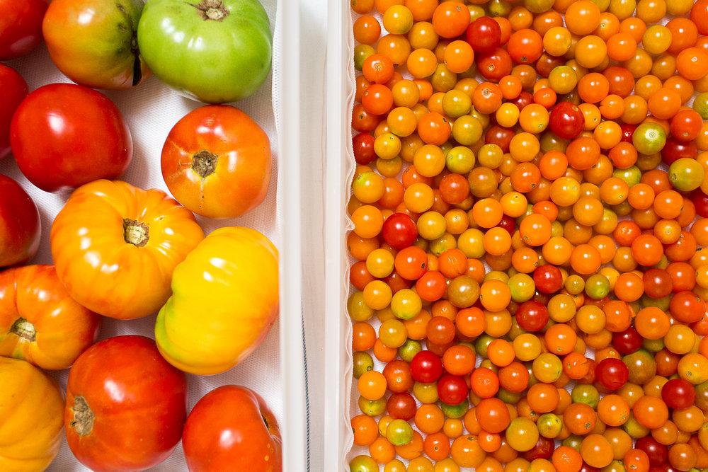 cherry-tomatos-23841282339537KiC7.jpg