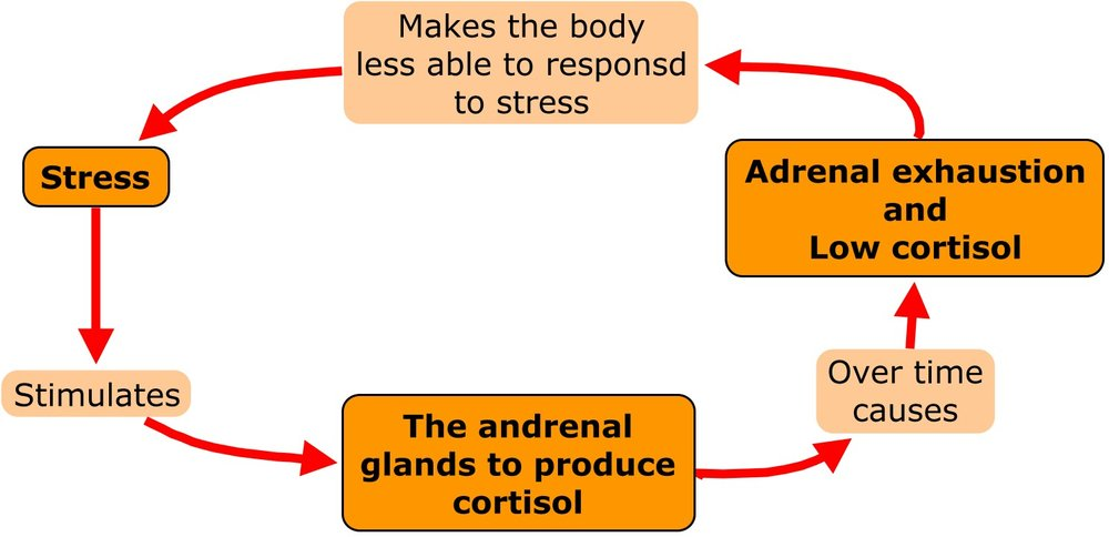 The viscous adrenal cycle
