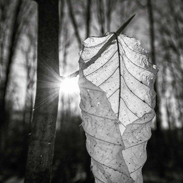 Shine On #canada #imagesofcanada #ontario #ontario_adventures #simcoecounty #square #bnw #bnwphotography #bnw_captures #blackandwhite #blackandwhitephotography #canon #g5x