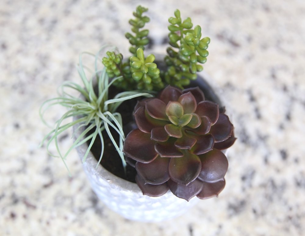 Flant Succulent Gardens fry by design