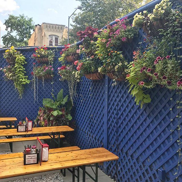 It's like the secret garden but with beer🌷🍻 #beergardens #arethebestgardens