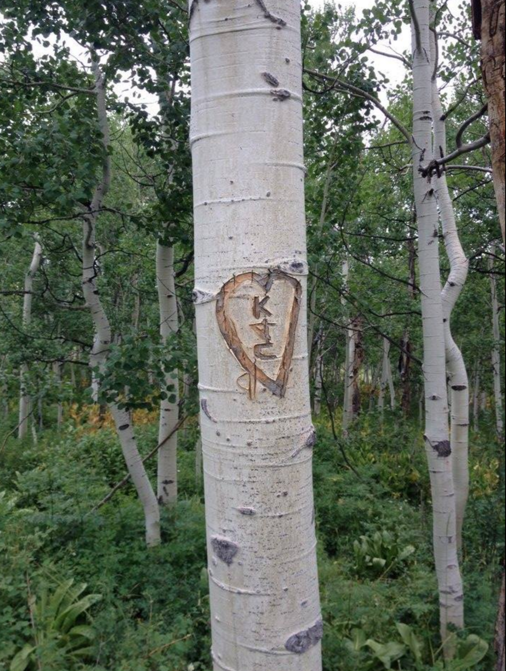Carvings on aspen trees are permanent marks.