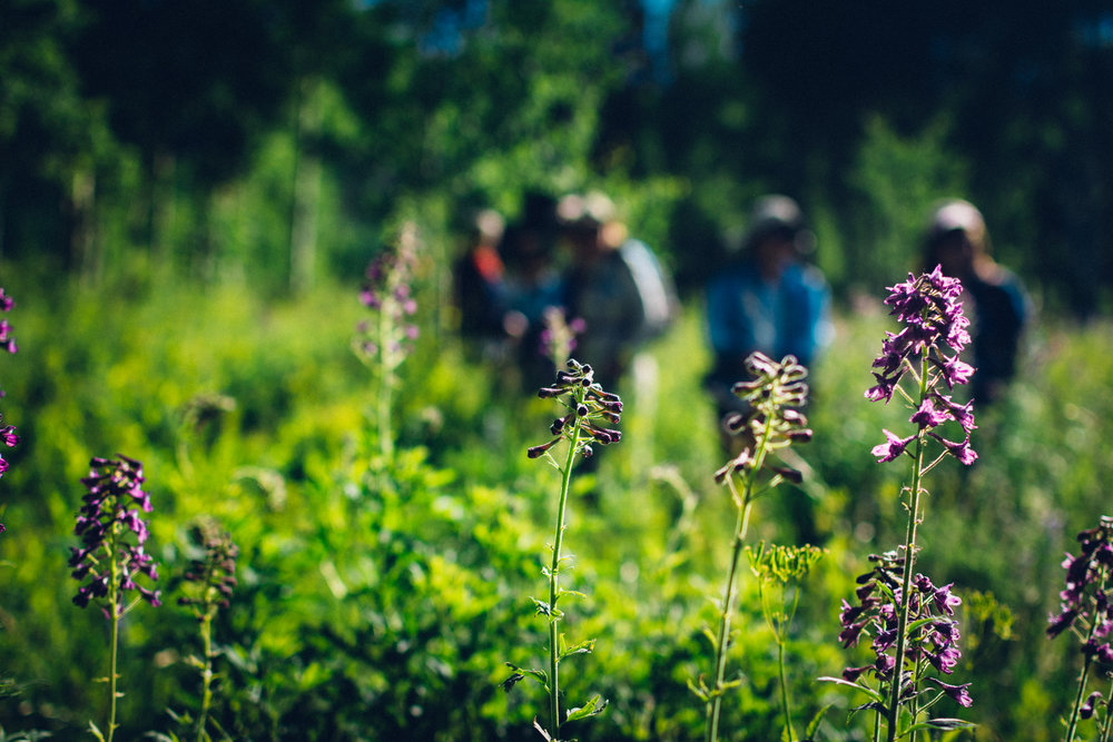 Hikers enjoying the Wildflower Capitol of Colorado.