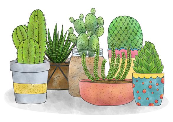 cactipots.jpg