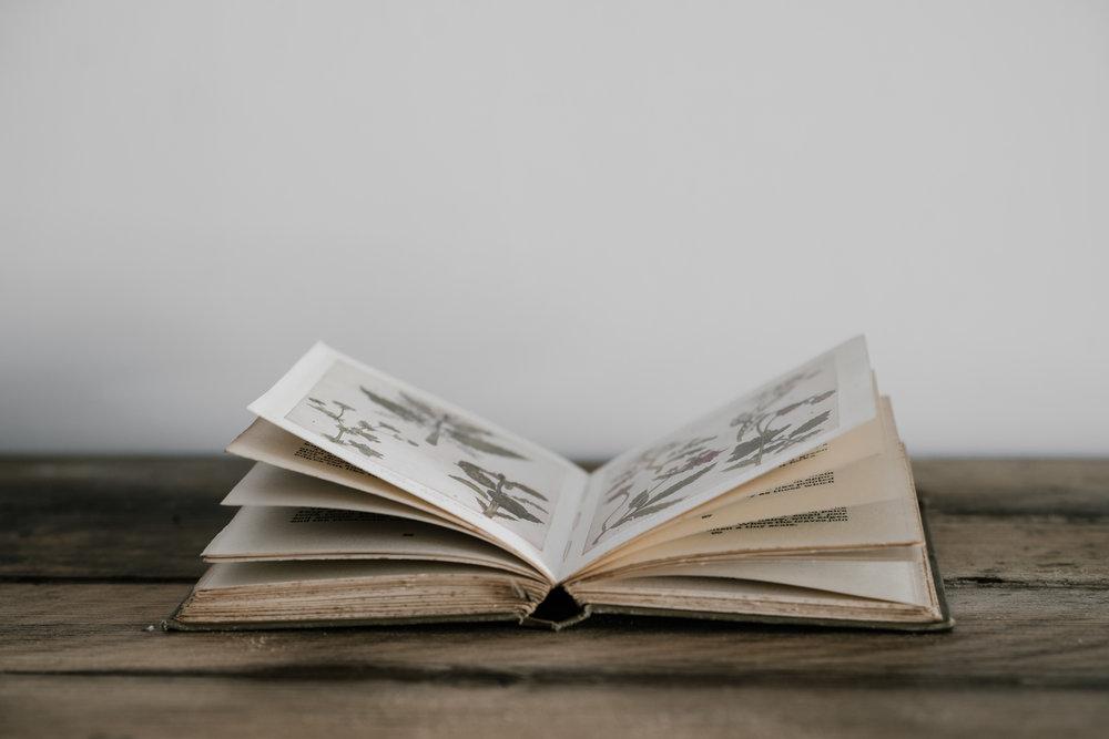 Books - The Seven Autopsies of Nora Hanneman
