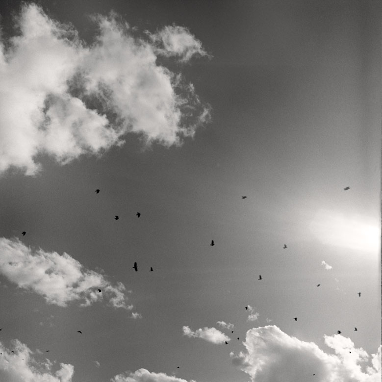 16_Crows-and-Clouds.jpg