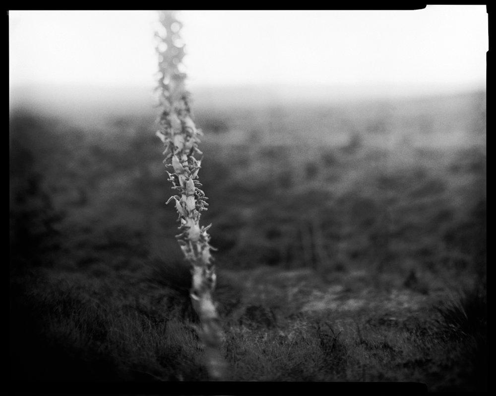 07_03_Yucca1.jpg
