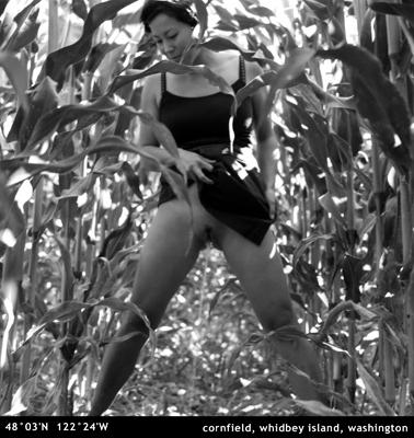 4_cornfield.jpg