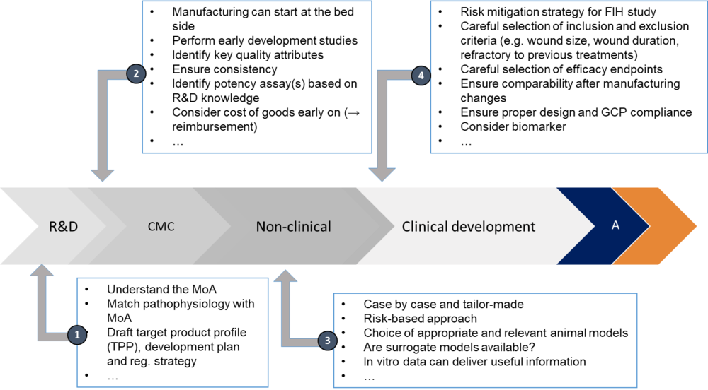 Figure: 1:  What needs to be considered at key transition points in the development of advanced therapies for wound management