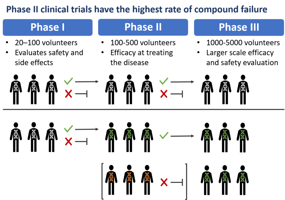 Figure 3: Impact of patient stratification by genotype on clinical trial outcome   Only when a clinical trial passes a phase (green tick), it can be moved to the next phase. Many trials, however, fail in the early stages. Many drugs are only effective for a genetic subset of patients (depicted by different color genomes). Screening patients prior to the trial for relevant biomarkers can greatly improve clinical trial outcomes.