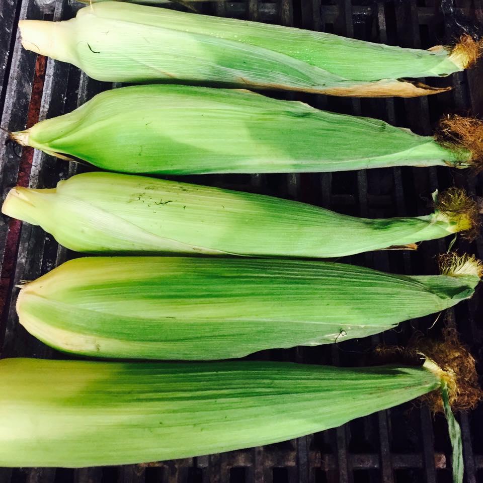 Closeup Corn.jpg