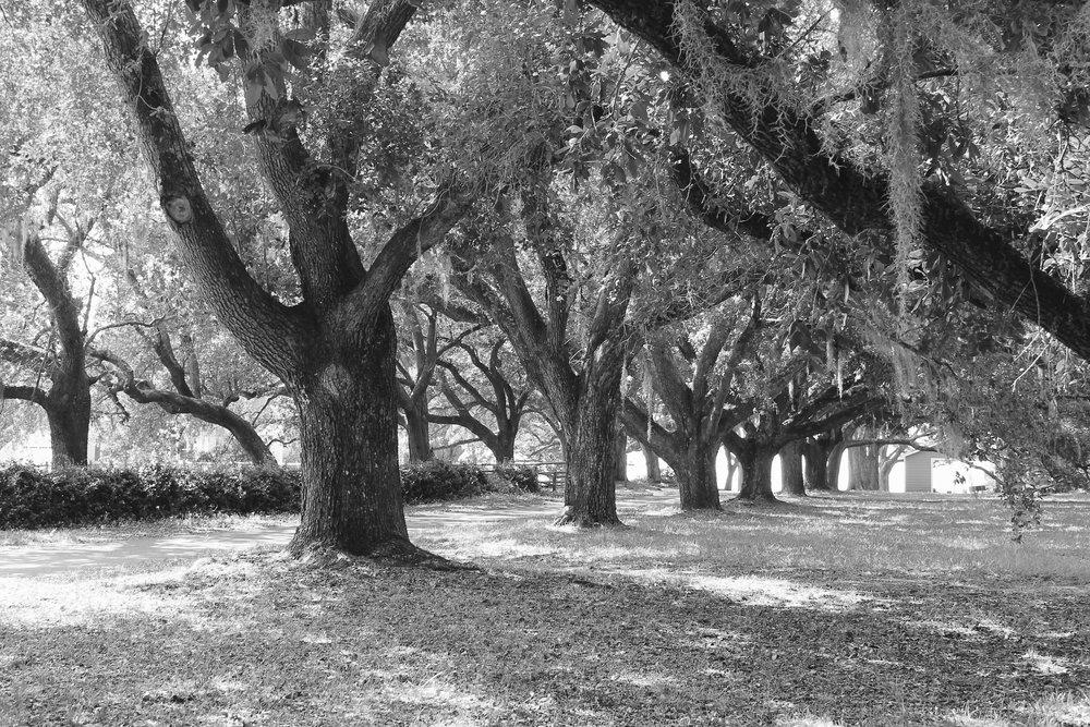 Heather  Denison - trees 062.jpg