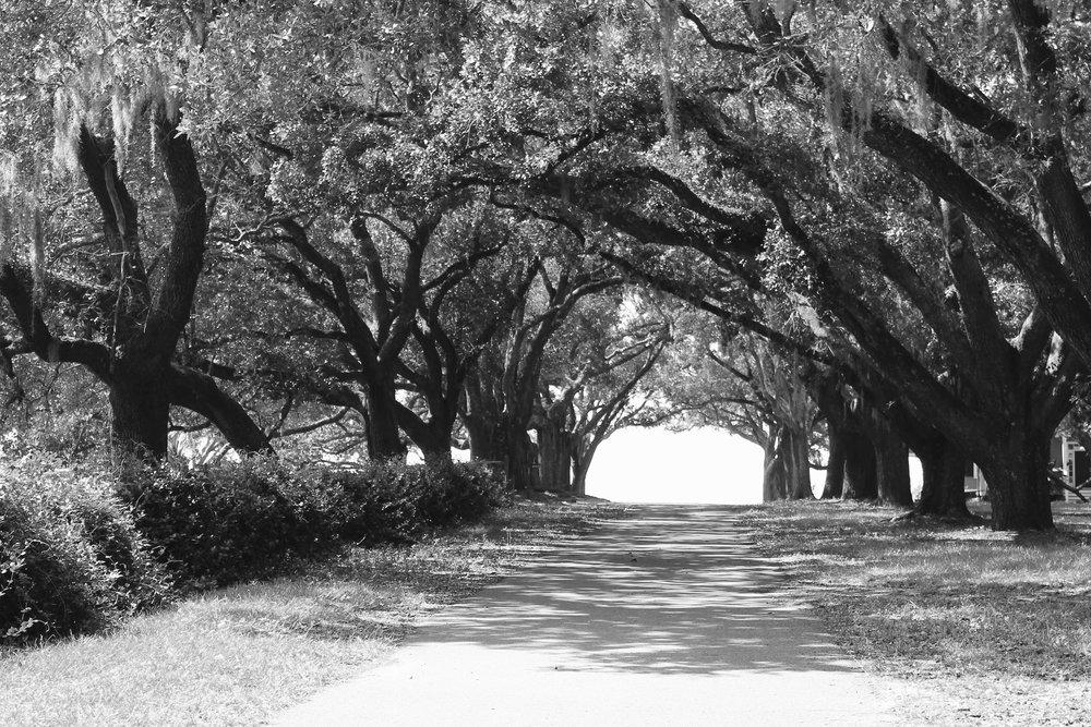 Heather  Denison - trees 063.jpg