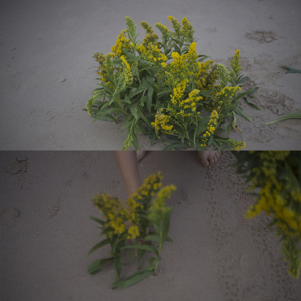 planter les fleurs III.jpg
