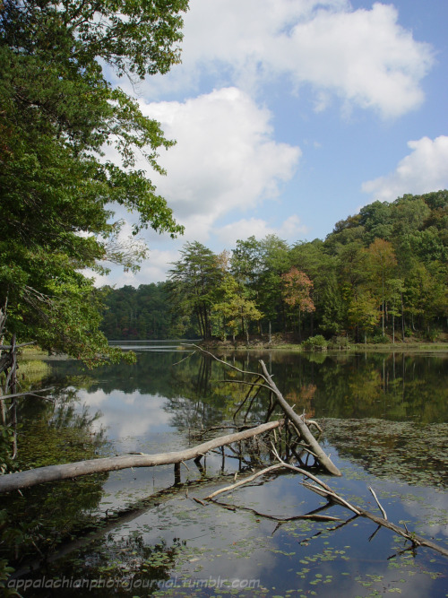 Chenoa Lake  Bell County, KY